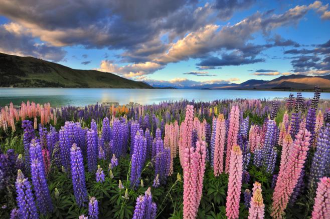ニュージーランドのワーキングホリデー(ワーホリ)最新情報