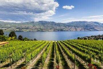 ケロウナに広がる美しいオカナガン湖畔とワイン畑