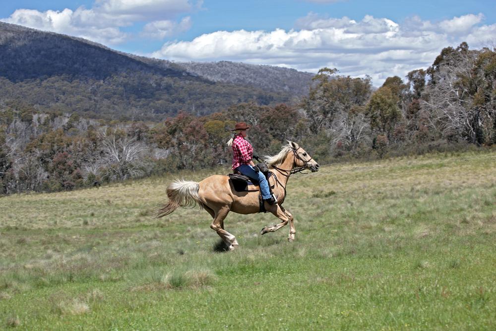 オーストラリアの広大な自然の中で乗馬体験!
