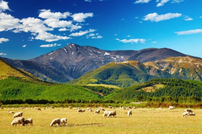 留学するなら知っておきたい♪ニュージーランド人の特徴は?