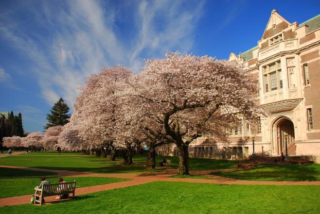 【体験談】アメリカ・ワシントン大学に留学!ハロウィーンも体験しました♡