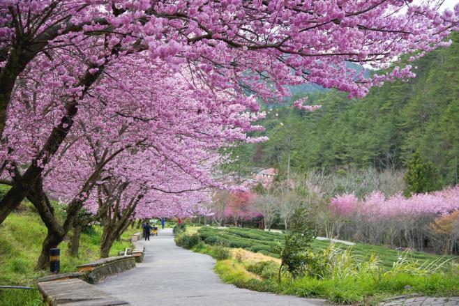 台湾の気候や気温は日本に近い?快適に過ごすためのお役立ち情報♡