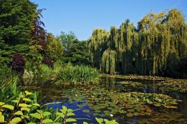 フランス・ジヴェルニーの「モネの邸宅と庭園」ってどんなところ?