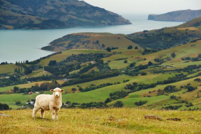 ニュージーランド留学中によくあるトラブルとその解決法