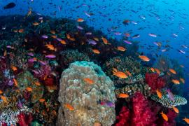 【体験談】フィジー留学でダイビングを体験!魅惑のリゾートスポットも合わせてご紹介します♪