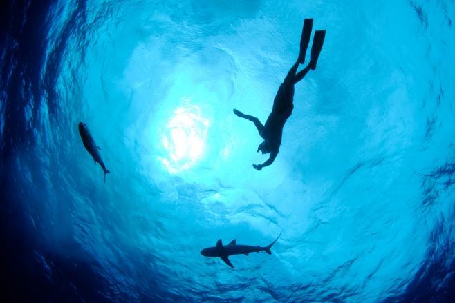 【体験談】ハワイのダイビング留学でインストラクターの資格を取得!