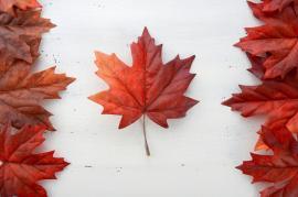 カナダのワーキングホリデービザ、いよいよ残り1,000名以下に!【ワーホリ協定国ニュース】