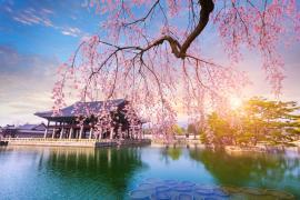 【体験談】韓国のワーホリライフを大満喫♪語学堂にアルバイト、料理教室まで通っちゃいました!