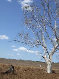 【体験談】憧れの海外生活!馬に魅せられたオーストラリアのワーキングホリデー