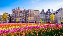 オランダとのワーキングホリデーに関する協議が開始!【ワーホリ協定国ニュース】